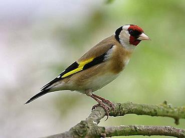 Ver tema duda con la longevidad de los canarios www for Jardin canario horario